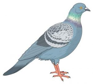 free-estimate-pigeon-netting-control