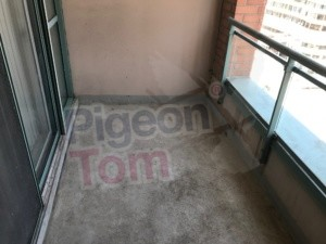 balcony, cleaning, netting, bird, control, services, pigeon