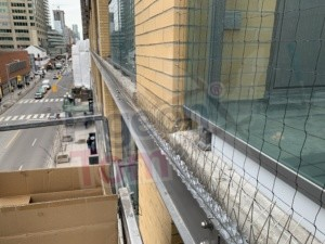 Yonge & Yorkville (Cleaning + Bird Spikes + Netting)